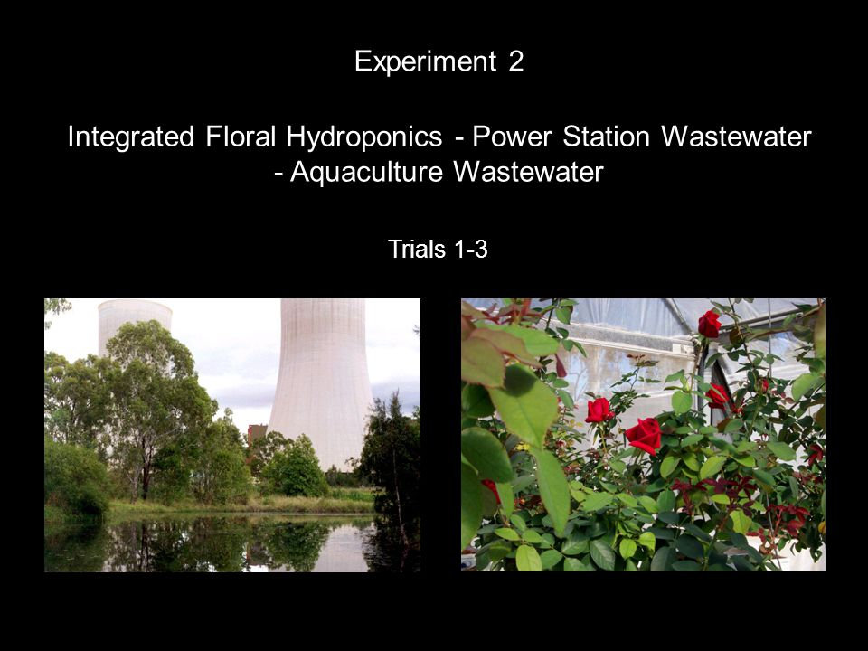 Integrated Floral Hydroponics - Power Station Wastewater - Aquaculture Wastewater Experiment 2 Trials 1-3