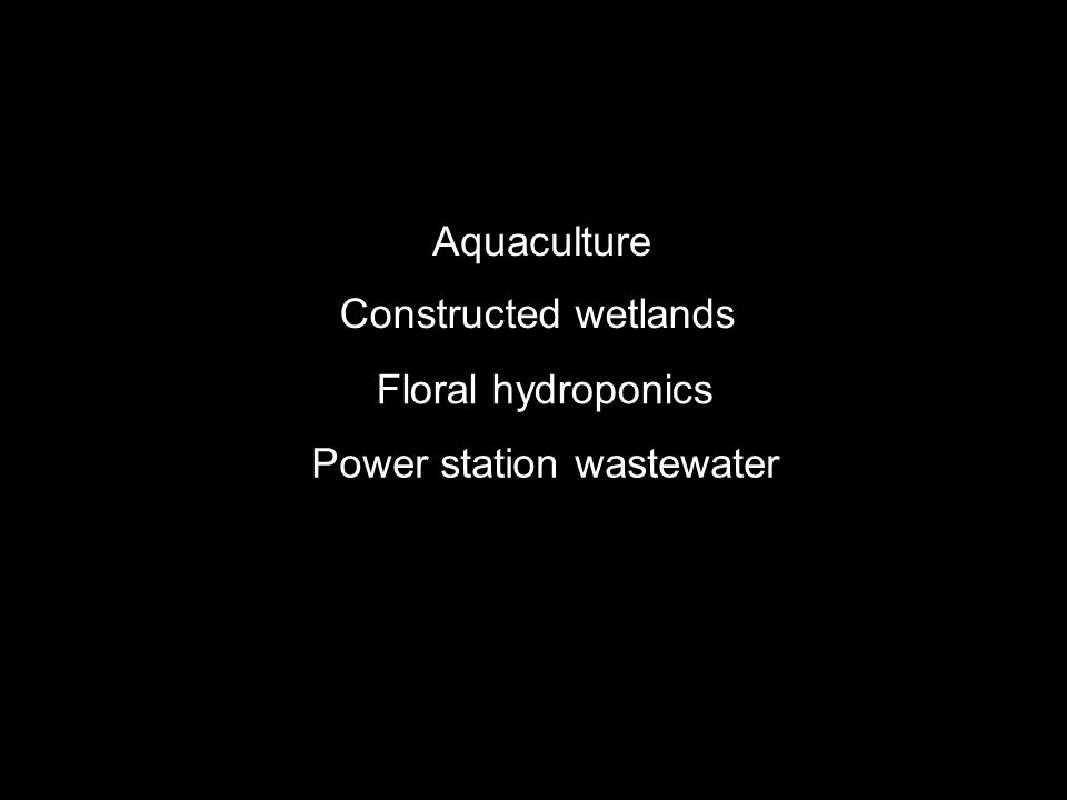 Constructed wetlands Aquaculture Power station wastewater Floral hydroponics