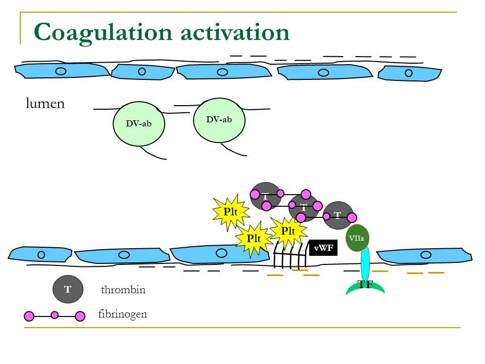 DV-ab lumen Coagulation activation DV-ab VIIa vWF fibrinogen thrombin TF T T T Plt T
