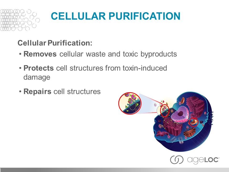 CELLULAR PURIFICATION Cellular Purification: Removes cellular waste and toxic byproducts Protects cell structures from toxin-induced damage Repairs cell structures