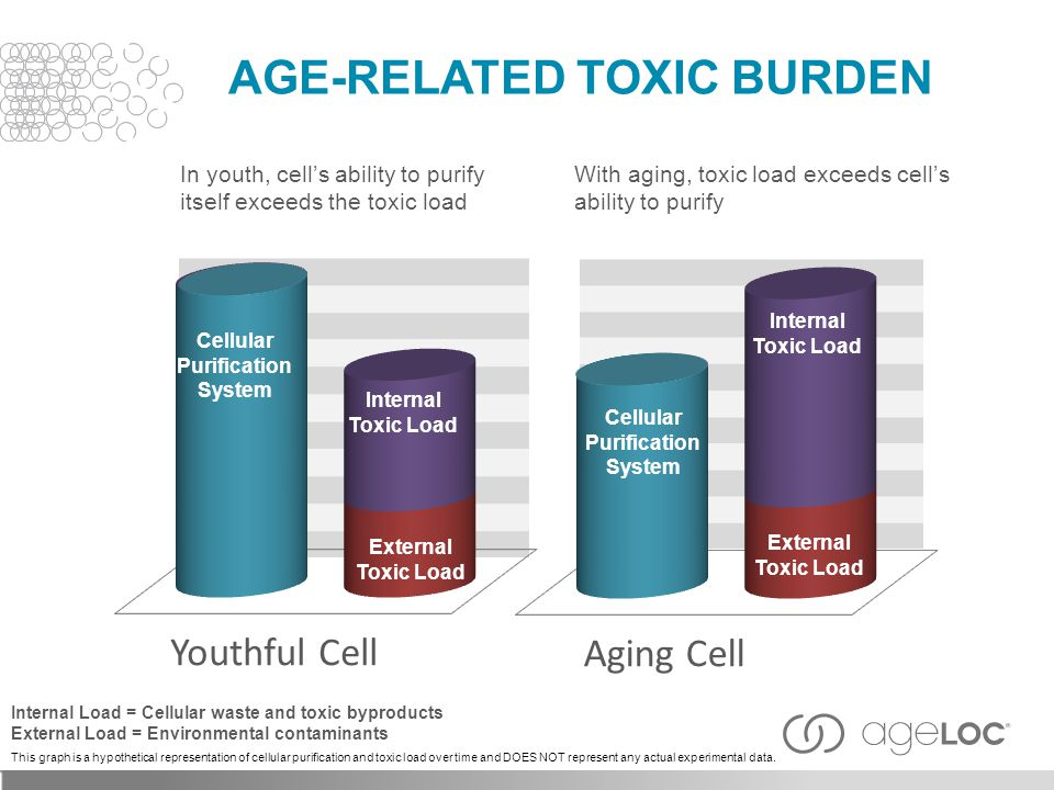 AGE-RELATED TOXIC BURDEN Cellular Purification System Internal Toxic Load Youthful Cell Aging Cell In youth, cell's ability to purify itself exceeds the toxic load With aging, toxic load exceeds cell's ability to purify External Toxic Load Internal Toxic Load Internal Load = Cellular waste and toxic byproducts External Load = Environmental contaminants This graph is a hypothetical representation of cellular purification and toxic load over time and DOES NOT represent any actual experimental data.