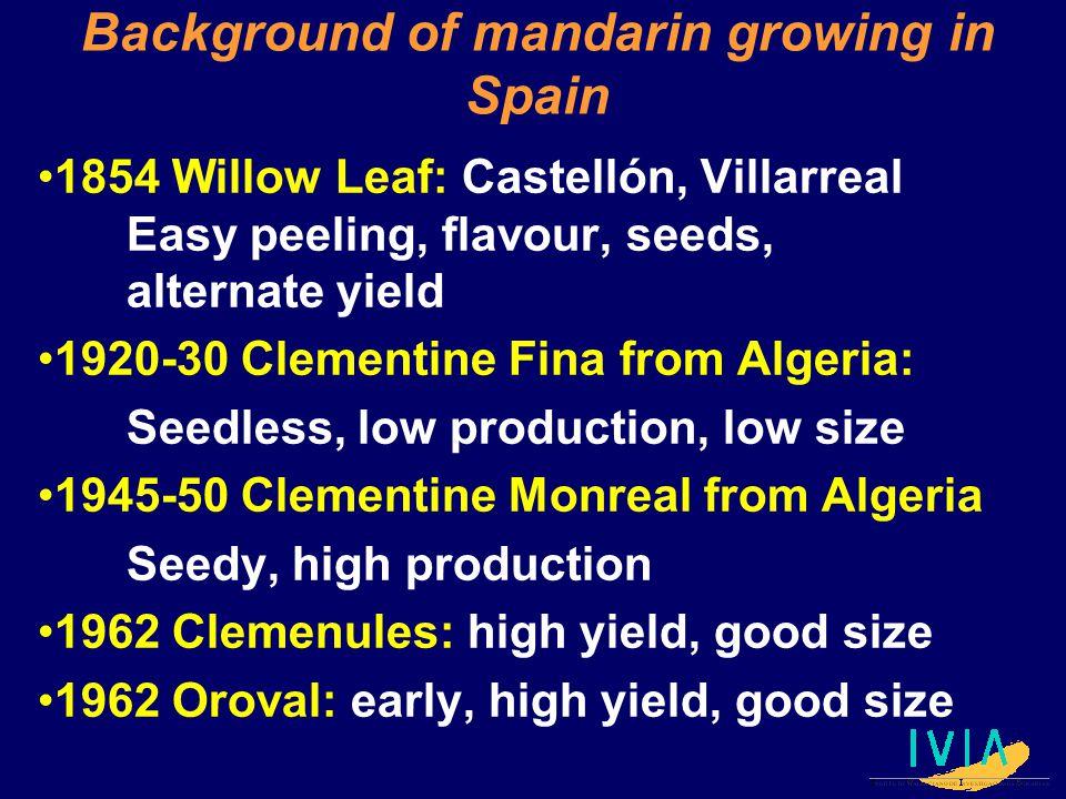 Background of mandarin growing in Spain 1854 Willow Leaf: Castellón, Villarreal Easy peeling, flavour, seeds, alternate yield 1920-30 Clementine Fina