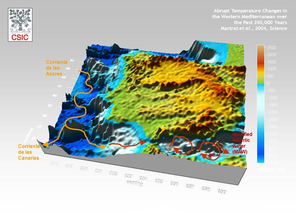 Corriente de las Azores Corriente de las Canarias Modified Atlantic water (MAW) altura (m) Modelo de circulación oceánica alrededor de la Península Ib