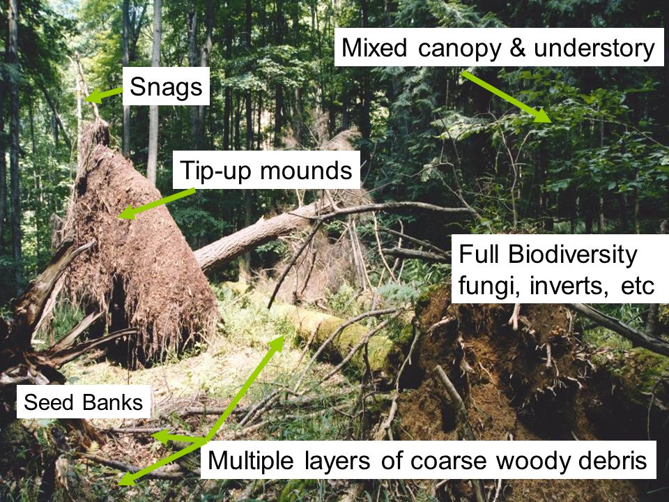 Tip-up mounds Snags Multiple layers of coarse woody debris Mixed canopy & understory Full Biodiversity fungi, inverts, etc Seed Banks Soil and soil forming processes are the resource