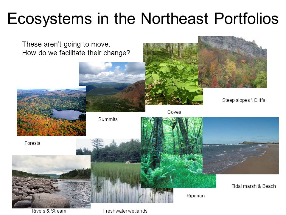 Ecosystems in the Northeast Portfolios Forests Riparian Tidal marsh & Beach Steep slopes \ Cliffs Rivers & Stream Coves Summits Freshwater wetlands Th