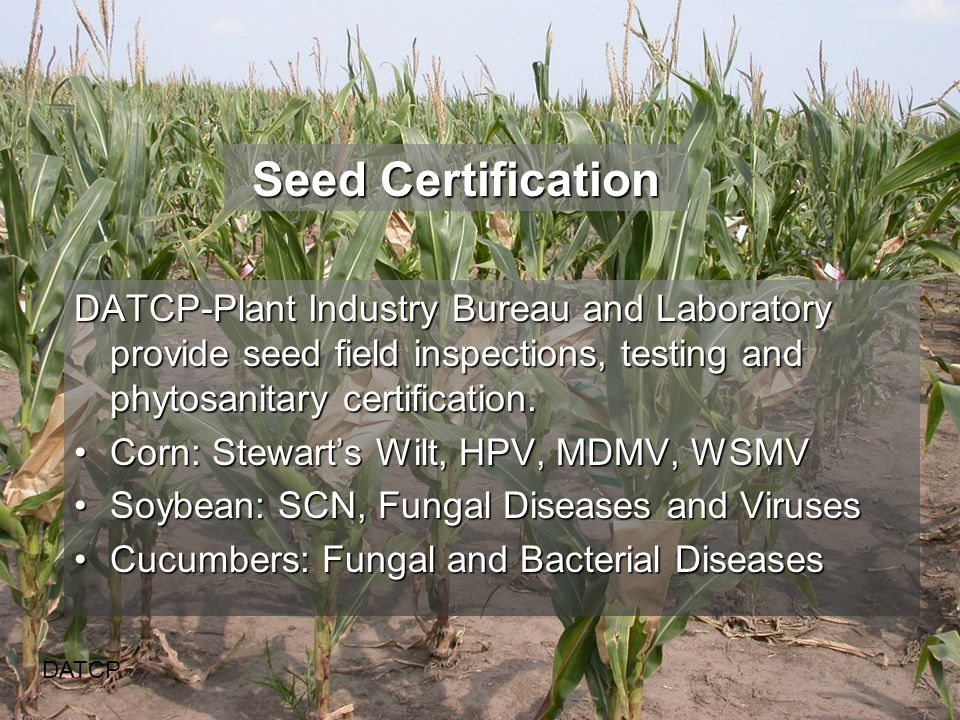 Seed Certification DATCP DATCP-Plant Industry Bureau and Laboratory provide seed field inspections, testing and phytosanitary certification.