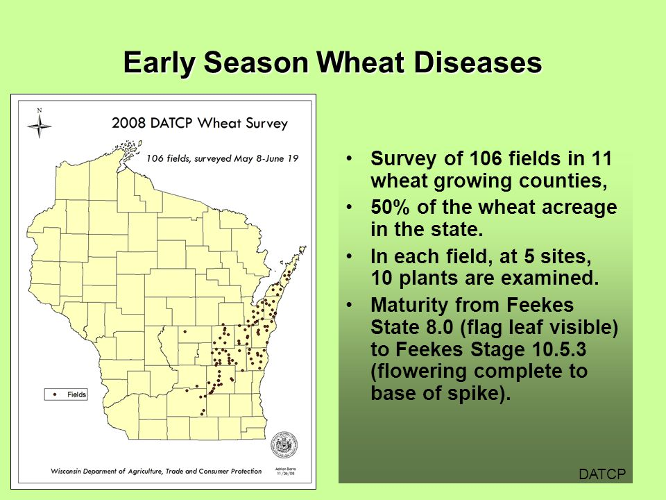 Early Season Wheat Diseases Survey of 106 fields in 11 wheat growing counties, 50% of the wheat acreage in the state.