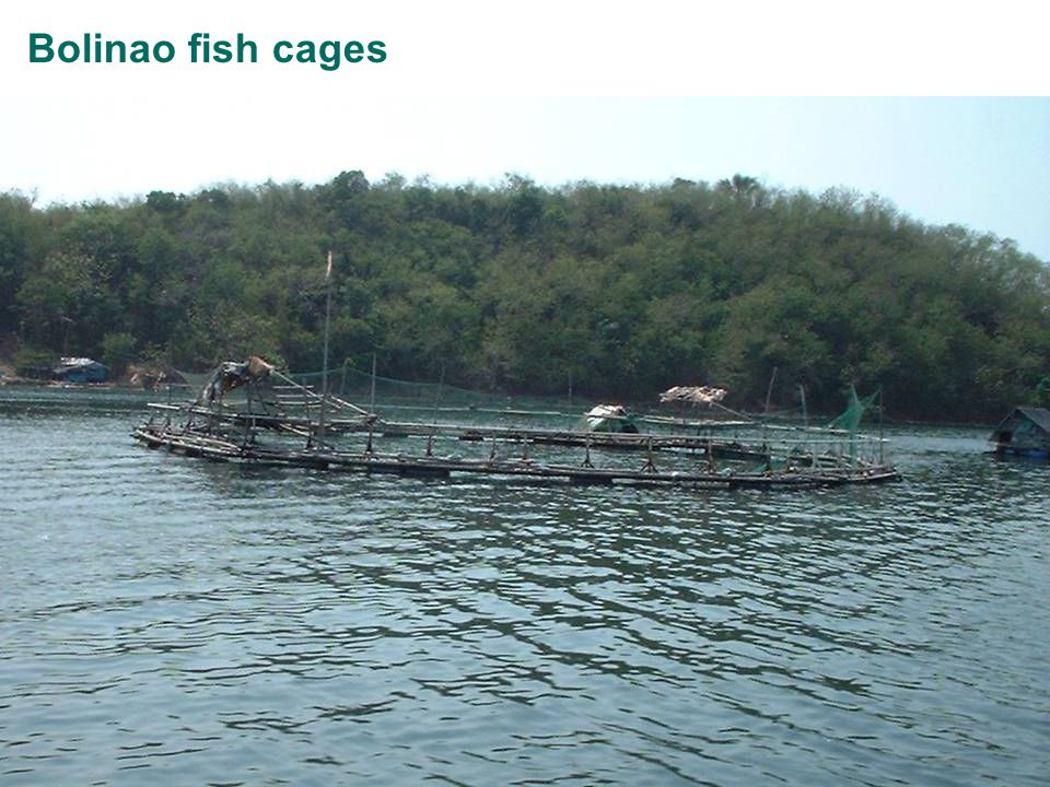 Page 9 Bolinao fish cages Bolinao – Fish CageRangeAverage Date16 April 2005 TypeFish Cage Net Volume150 to 1890 m31155 m3 SpeciesMilkfish, GrouperMilkfish 98% Fry supply12,000 to 80,00042,400 Density0.1 to 30 kg/m315.4 kg/m3 Present Size2 to 400g304g Market size350g to 500g433g Survival85% Culture period6 to 8 months6.8 months Present biomass0.08 to 24 tonnes11.45 tonnes Feed given12.5 to 575 kg/day320 kg/day Feeding rate1.45 to 4.45%/day2.85%/day FCR1.1 to 4:12.8:1