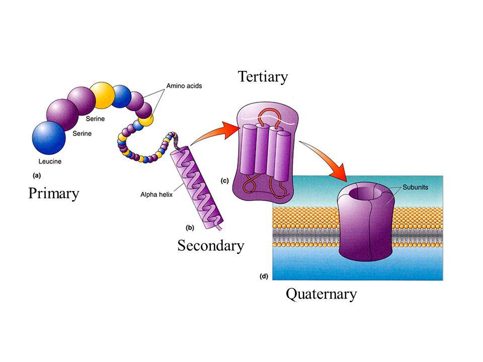 Primary Secondary Tertiary Quaternary