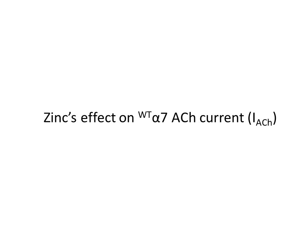 Zinc's effect on WT α7 ACh current (I ACh )