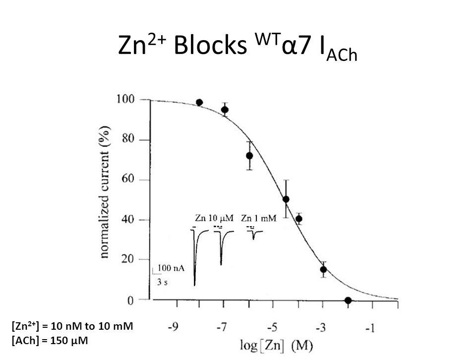 Zn 2+ Blocks WT α7 I ACh [Zn 2+ ] = 10 nM to 10 mM [ACh] = 150 μM