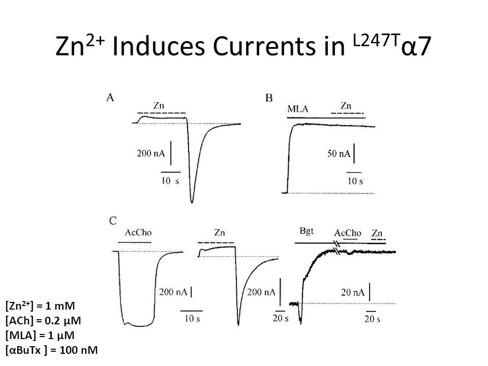 Zn 2+ Induces Currents in L247T α7 [Zn 2+ ] = 1 mM [ACh] = 0.2 μM [MLA] = 1 μM [αBuTx ] = 100 nM