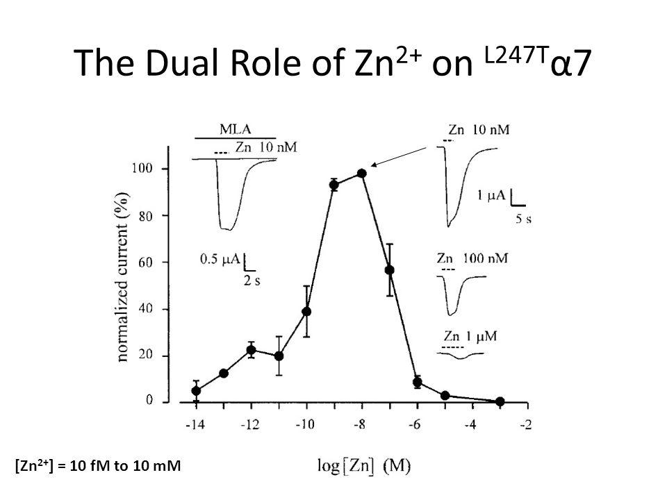 The Dual Role of Zn 2+ on L247T α7 [Zn 2+ ] = 10 fM to 10 mM
