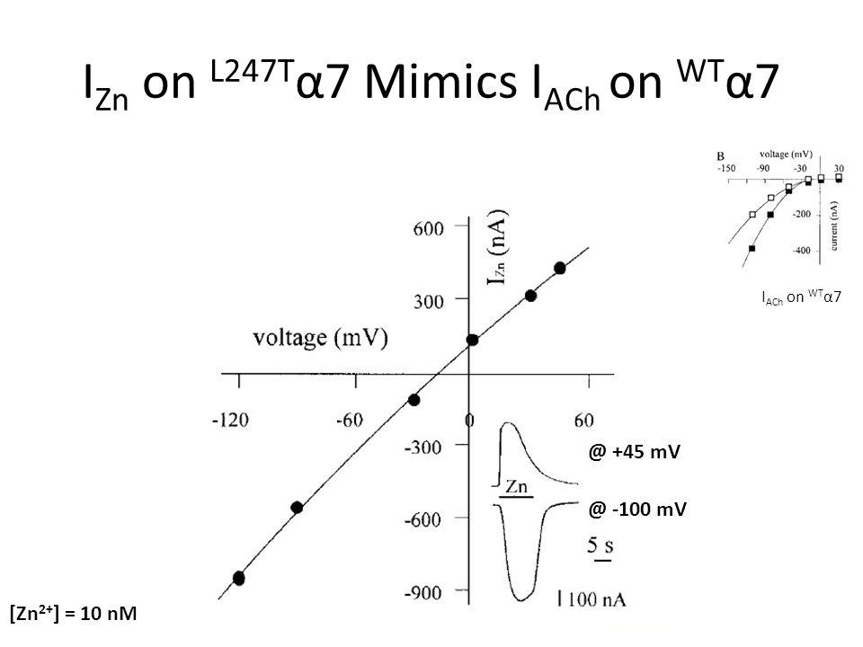 I Zn on L247T α7 Mimics I ACh on WT α7 [Zn 2+ ] = 10 nM @ +45 mV @ -100 mV I ACh on WT α7