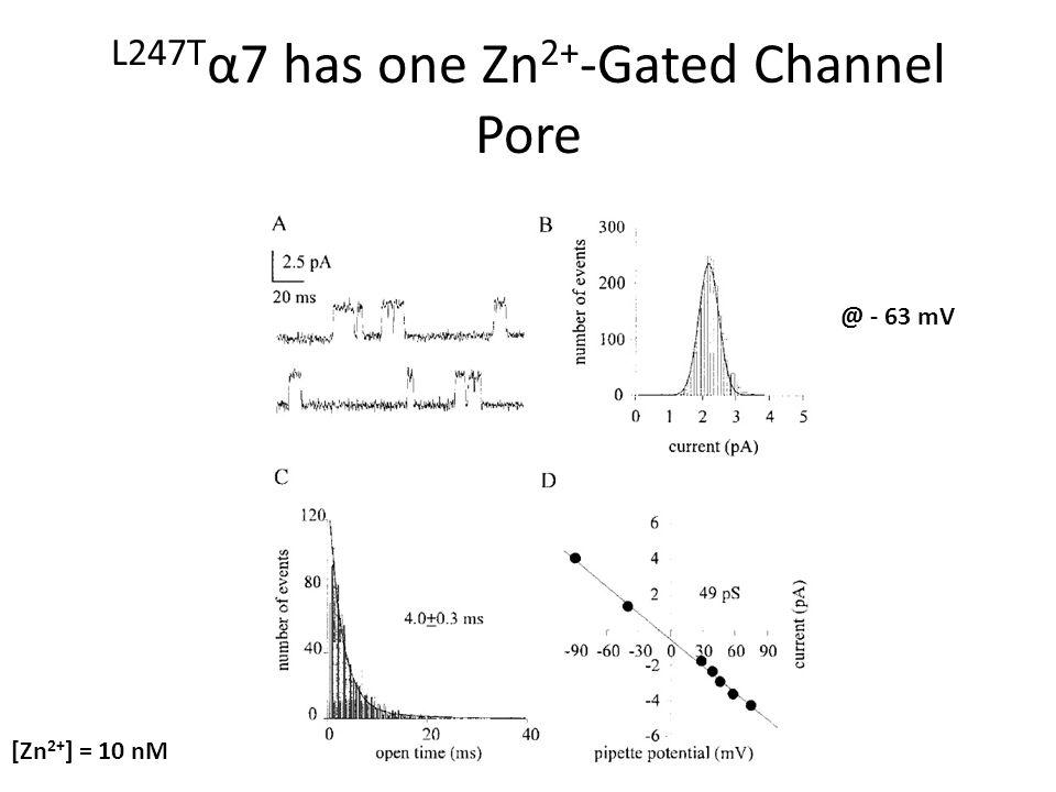 L247T α7 has one Zn 2+ -Gated Channel Pore [Zn 2+ ] = 10 nM @ - 63 mV
