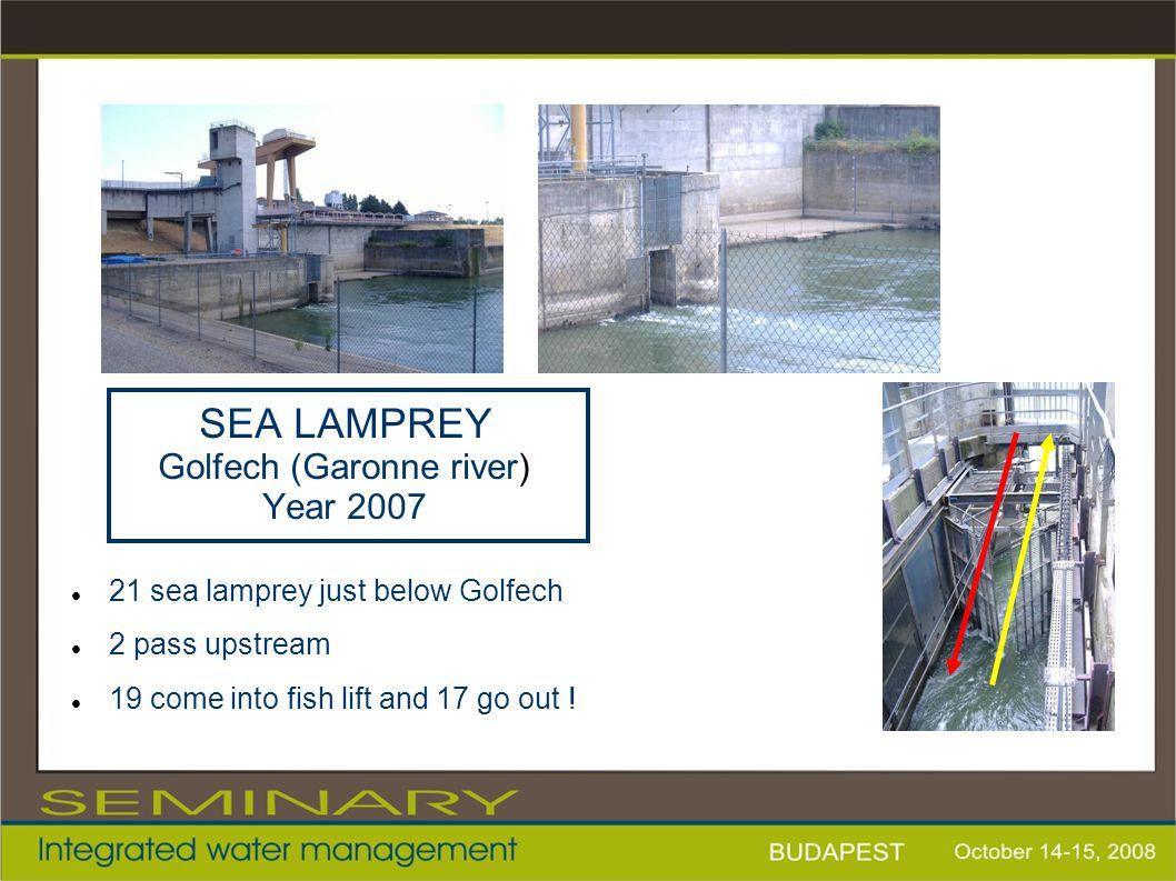 SEA LAMPREY Golfech (Garonne river) Year 2007 21 sea lamprey just below Golfech 2 pass upstream 19 come into fish lift and 17 go out !