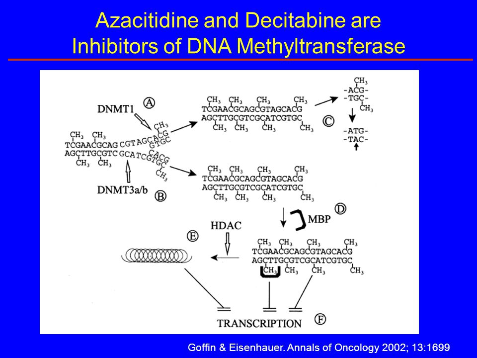 Goffin & Eisenhauer. Annals of Oncology 2002; 13:1699 Azacitidine and Decitabine are Inhibitors of DNA Methyltransferase