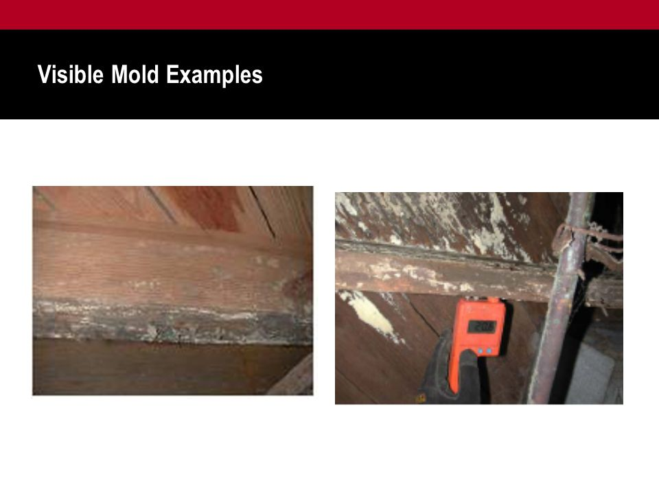Visible Mold Examples