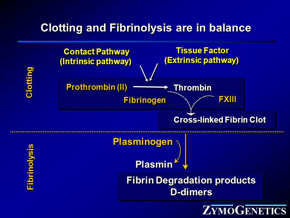 Z YMO G ENETICS Contact Pathway (Intrinsic pathway) Contact Pathway (Intrinsic pathway) Tissue Factor (Extrinsic pathway) Tissue Factor (Extrinsic pathway) Thrombin Fibrinogen Cross-linked Fibrin Clot Prothrombin (II) Clotting and Fibrinolysis are in balance Plasminogen Plasmin Fibrin Degradation products D-dimers Fibrin Degradation products D-dimers Clotting Fibrinolysis FXIII