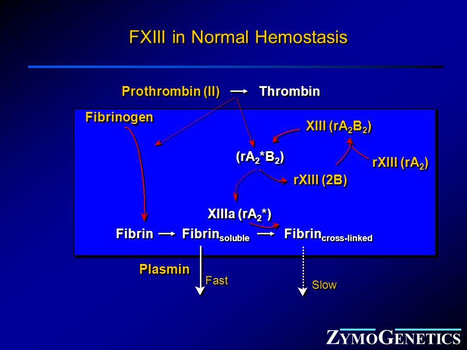 Z YMO G ENETICS Thrombin Fibrinogen Fibrin XIIIa (rA 2 *) Plasmin Prothrombin (II) FXIII in Normal Hemostasis XIII (rA 2 B 2 ) rXIII (rA 2 ) rXIII (2B) (rA 2 *B 2 ) Fibrin soluble Fibrin cross-linked Fast Slow