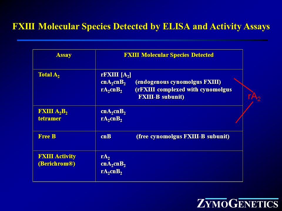 Z YMO G ENETICS FXIII Molecular Species Detected by ELISA and Activity Assays Assay FXIII Molecular Species Detected Total A 2 rFXIII [A 2 ] cnA 2 cnB 2 (endogenous cynomolgus FXIII) rA 2 cnB 2 (rFXIII complexed with cynomolgus FXIII-B subunit) rFXIII [A 2 ] cnA 2 cnB 2 (endogenous cynomolgus FXIII) rA 2 cnB 2 (rFXIII complexed with cynomolgus FXIII-B subunit) FXIII A 2 B 2 tetramer cnA 2 cnB 2 rA 2 cnB 2 cnA 2 cnB 2 rA 2 cnB 2 Free B cnB (free cynomolgus FXIII-B subunit) FXIII Activity (Berichrom®) FXIII Activity (Berichrom®) rA 2 cnA 2 cnB 2 rA 2 cnB 2 rA 2 cnA 2 cnB 2 rA 2 cnB 2 rA 2