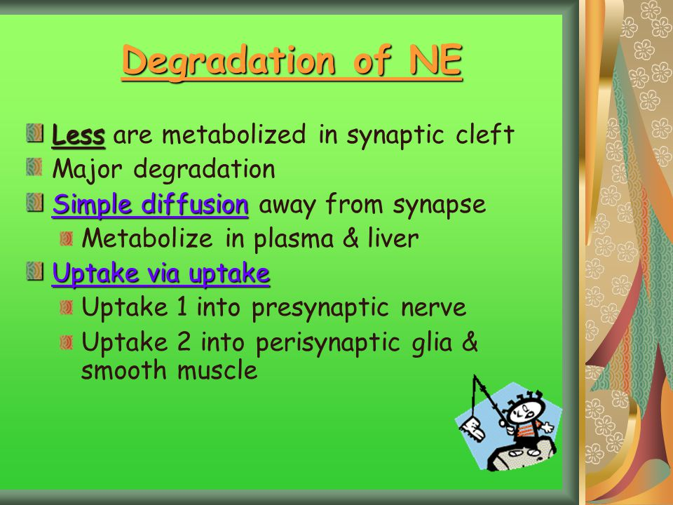Degradation of NE Less Less are metabolized in synaptic cleft Major degradation Simple diffusion Simple diffusion away from synapse Metabolize in plas