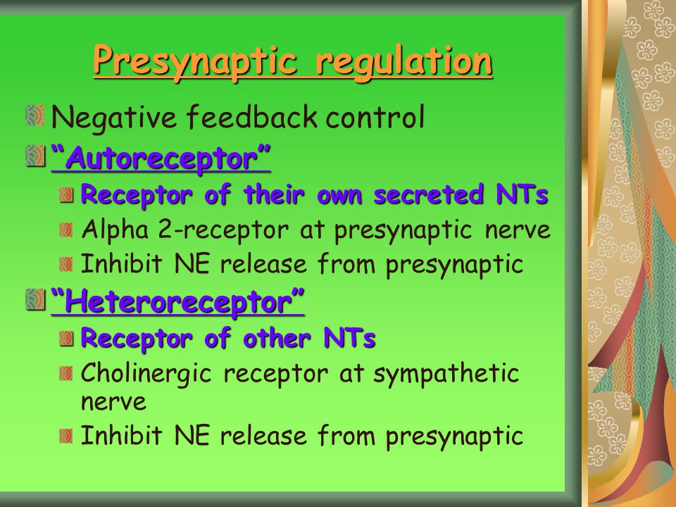 Presynaptic regulation Negative feedback control Autoreceptor Receptor of their own secreted NTs Alpha 2-receptor at presynaptic nerve Inhibit NE release from presynaptic Heteroreceptor Receptor of other NTs Cholinergic receptor at sympathetic nerve Inhibit NE release from presynaptic