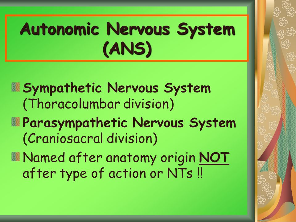 Autonomic Nervous System (ANS) Sympathetic Nervous System (Thoracolumbar division) Parasympathetic Nervous System (Craniosacral division) Named after