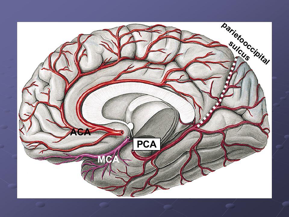 ACA MCA PCA parietooccipital sulcus