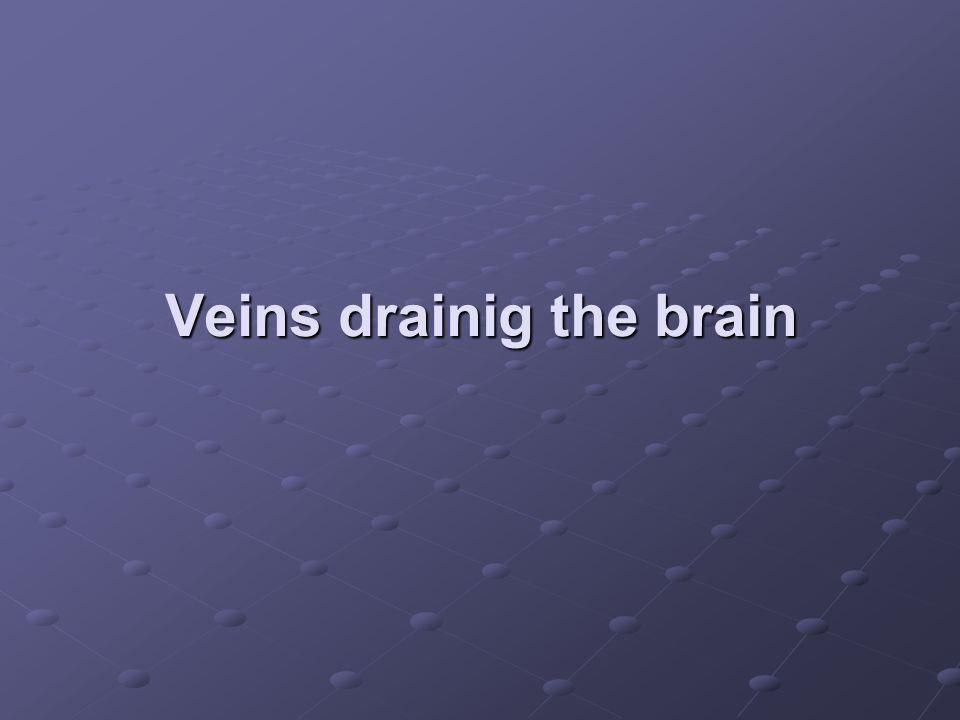 Veins drainig the brain