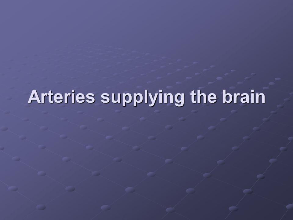 Arteries supplying the brain
