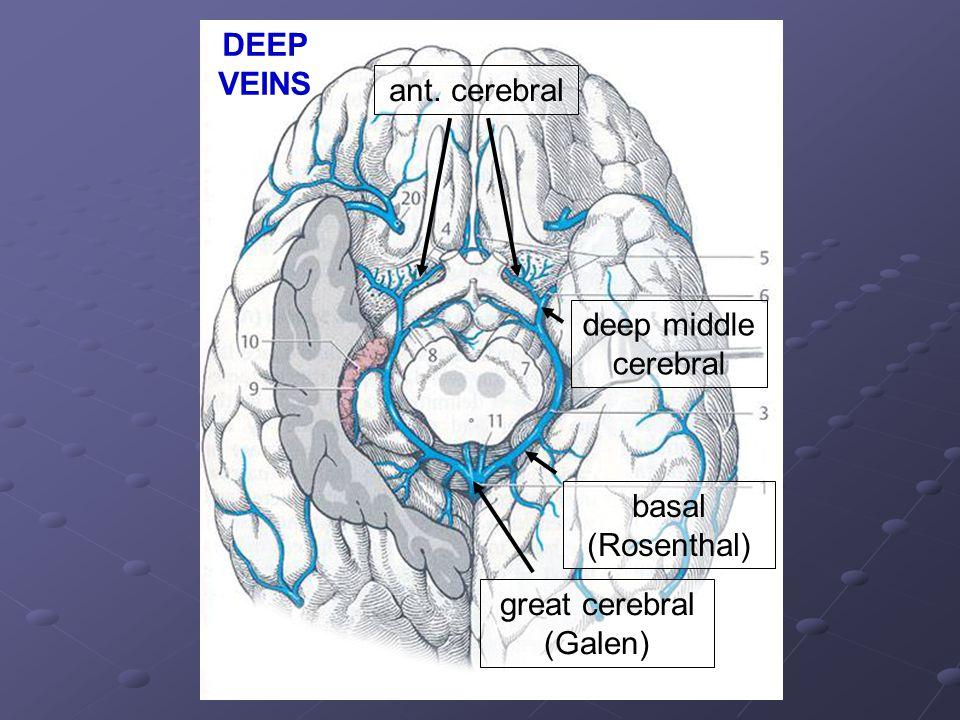 ant. cerebral deep middle cerebral basal (Rosenthal) great cerebral (Galen) DEEP VEINS