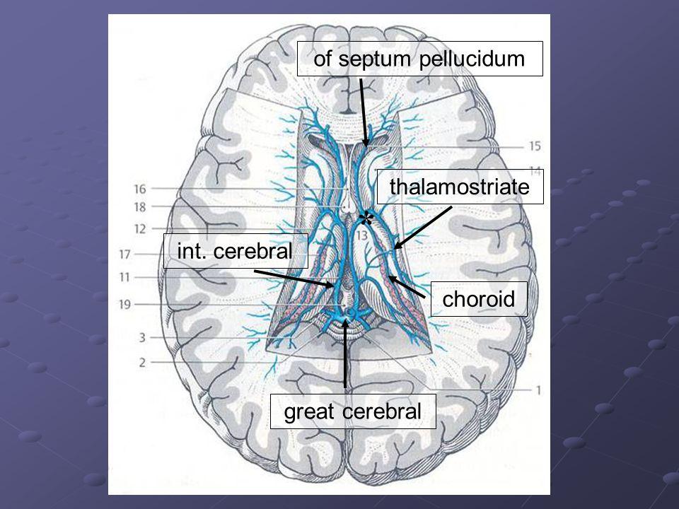 of septum pellucidum thalamostriate choroid * int. cerebral great cerebral