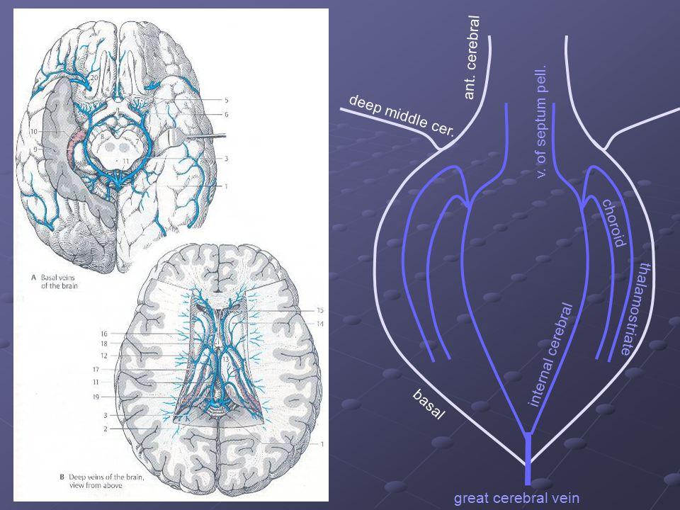 ant. cerebral deep middle cer. basal v. of septum pell. thalamostriate choroid internal cerebral great cerebral vein