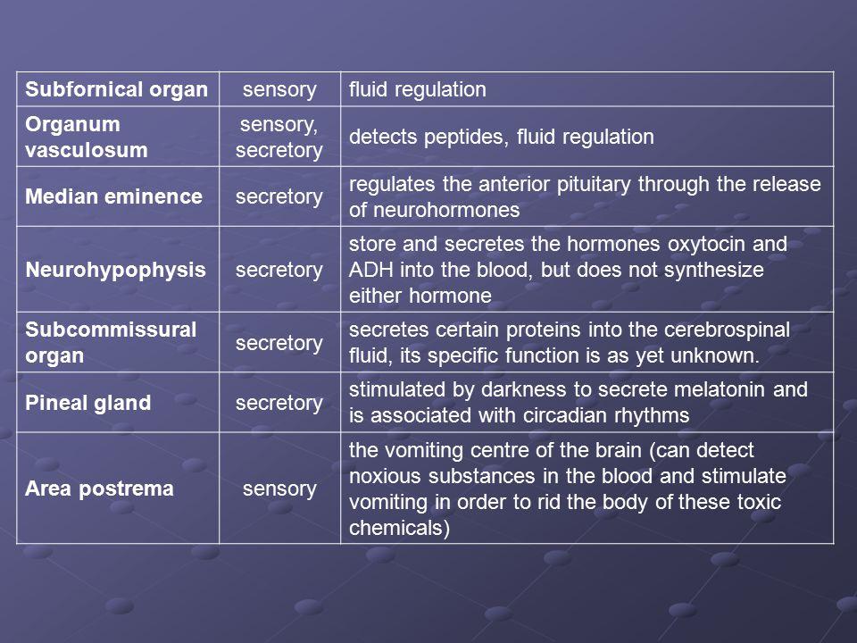 Subfornical organsensoryfluid regulation Organum vasculosum sensory, secretory detects peptides, fluid regulation Median eminencesecretory regulates t