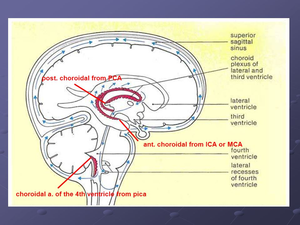 ant. choroidal from ICA or MCA post. choroidal from PCA choroidal a. of the 4th ventricle from pica