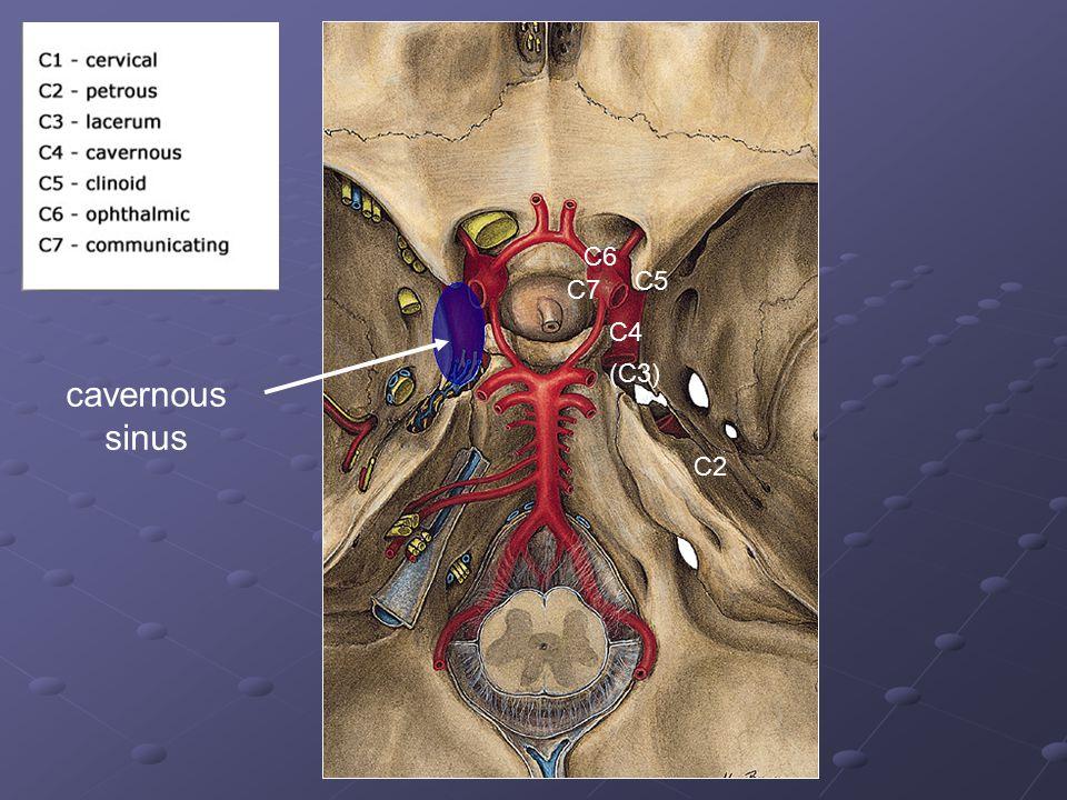 C2 C4 C5 C6 (C3) C7 cavernous sinus