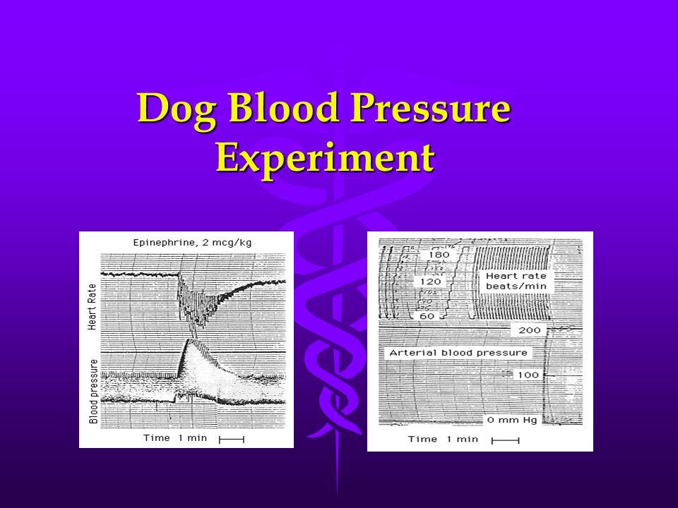 Dog Blood Pressure Experiment