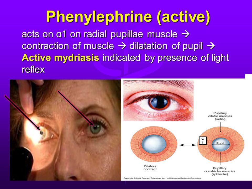 Phenylephrine (active) Phenylephrine (active) acts on α1 on radial pupillae muscle  contraction of muscle  dilatation of pupil  Active mydriasis indicated by presence of light reflex α1α1
