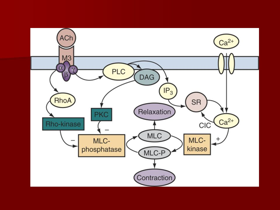 Future Pharmacogenetics Pharmacogenetics Tissue Engineering Tissue Engineering Gene Therapy Gene Therapy