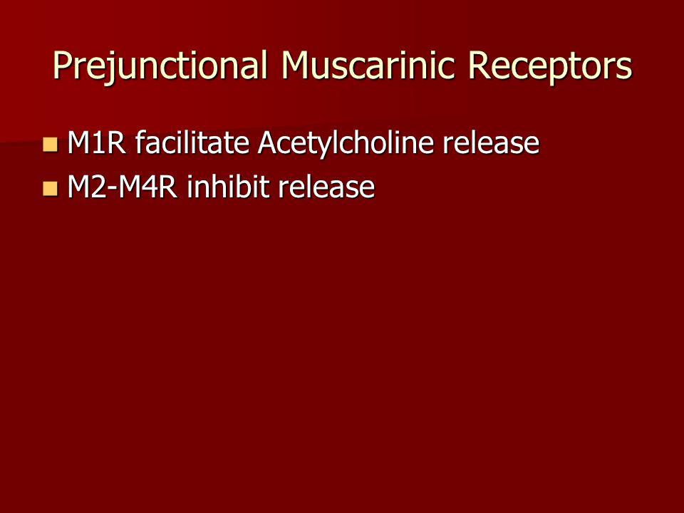 Spinal Ascending/Descending Paths Glutamatergic Glutamatergic Inhibitory Amino Acids Inhibitory Amino Acids Adrenergic Adrenergic Serotonergic Serotonergic Opioid Opioid Purinergic Purinergic