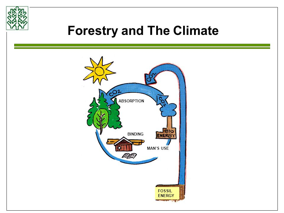 Sustainable wood energy Sustainable forest management Sustainable energy production Substitution effect Certified wood energy