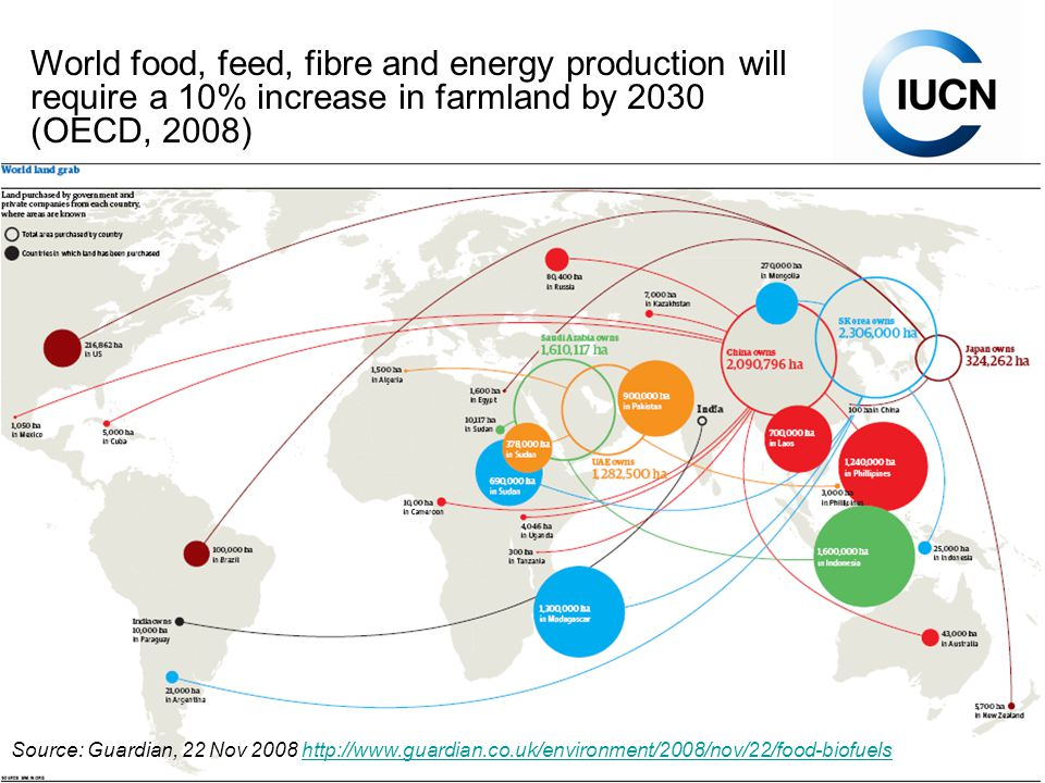2.3.3.Water for bioenergy or food, World Water Forum, 19th March 2009 Rising food prices.