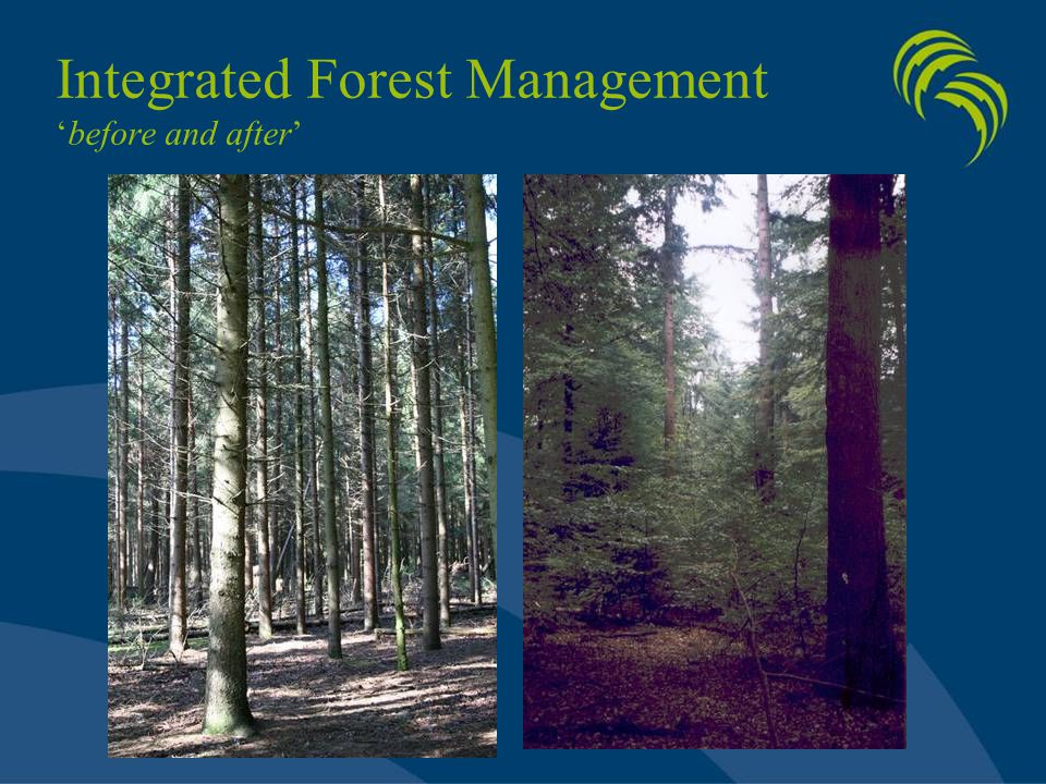 Integrated Forest Management 'before and after'