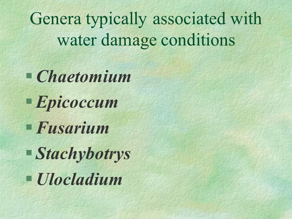 Genera typically associated with water damage conditions §Chaetomium §Epicoccum §Fusarium §Stachybotrys §Ulocladium
