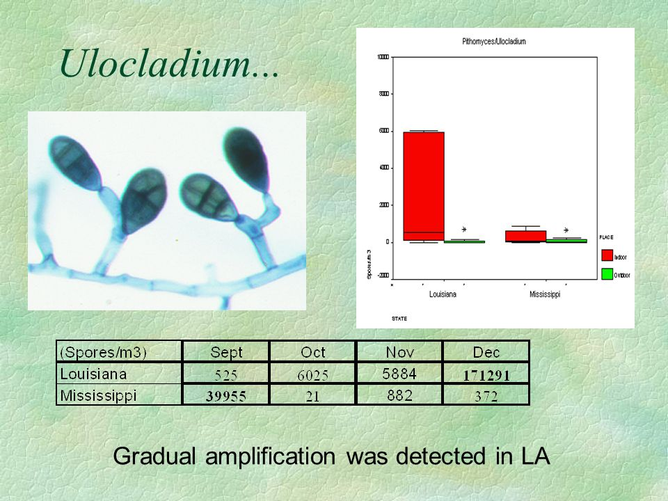 Ulocladium... Gradual amplification was detected in LA