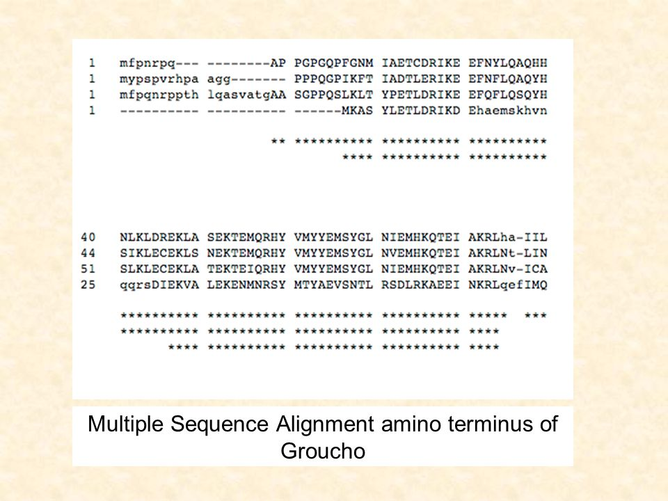 Multiple Sequence Alignment amino terminus of Groucho