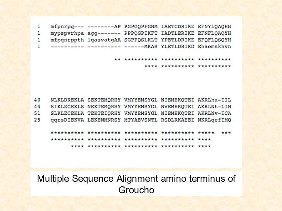 BM1M2M3M4E I1I2I3I4 MS..GL-- MT..NLAG MSA.NIAG MTARNLAG D1D2D3D4 M5M6 D5D6 I5I6 DELETE PERMITS INCORPORATION OF LAST TWO SITES OF SEQ1 I0