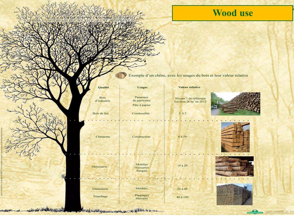 Wood use