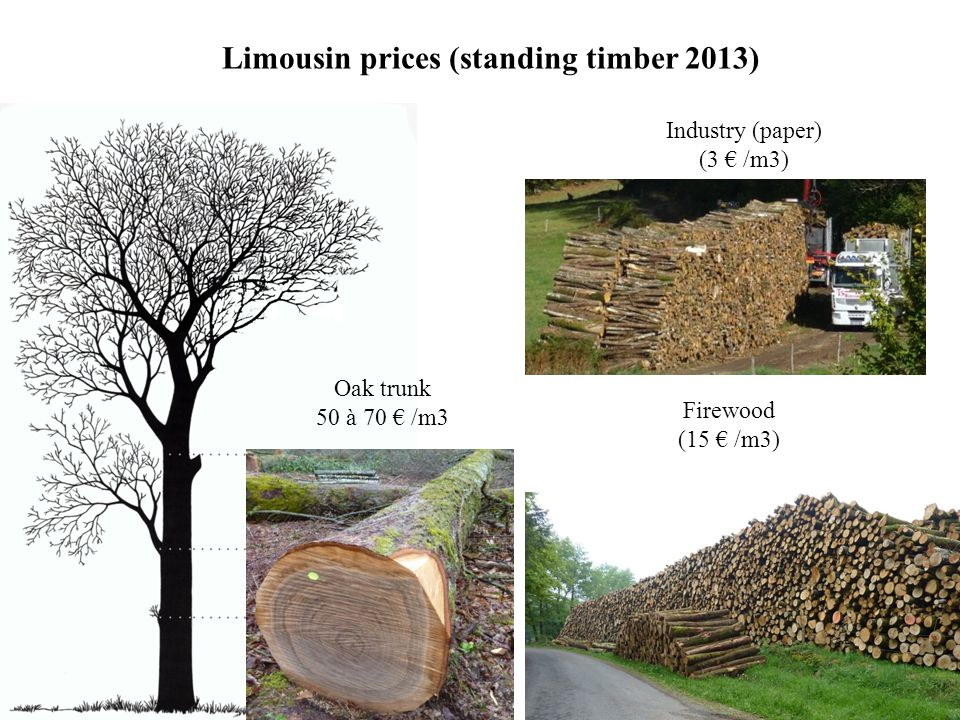 Limousin prices (standing timber 2013) Oak trunk 50 à 70 € /m3 Firewood (15 € /m3) Industry (paper) (3 € /m3)